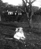 Algusered Särö. Bild 2911.