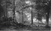 Skogsparti från Särö 1882