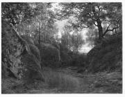 Skogsparti från Särö