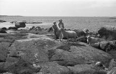 Småbräkorna Särö. Bild 3107.