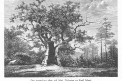 Västerskog Särö. Bild 11639.