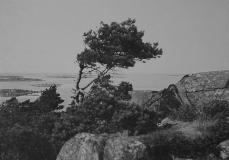 Västerskog Särö. Bild 30164.