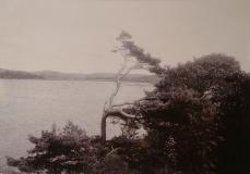 Västerskog Särö. Bild 30180.